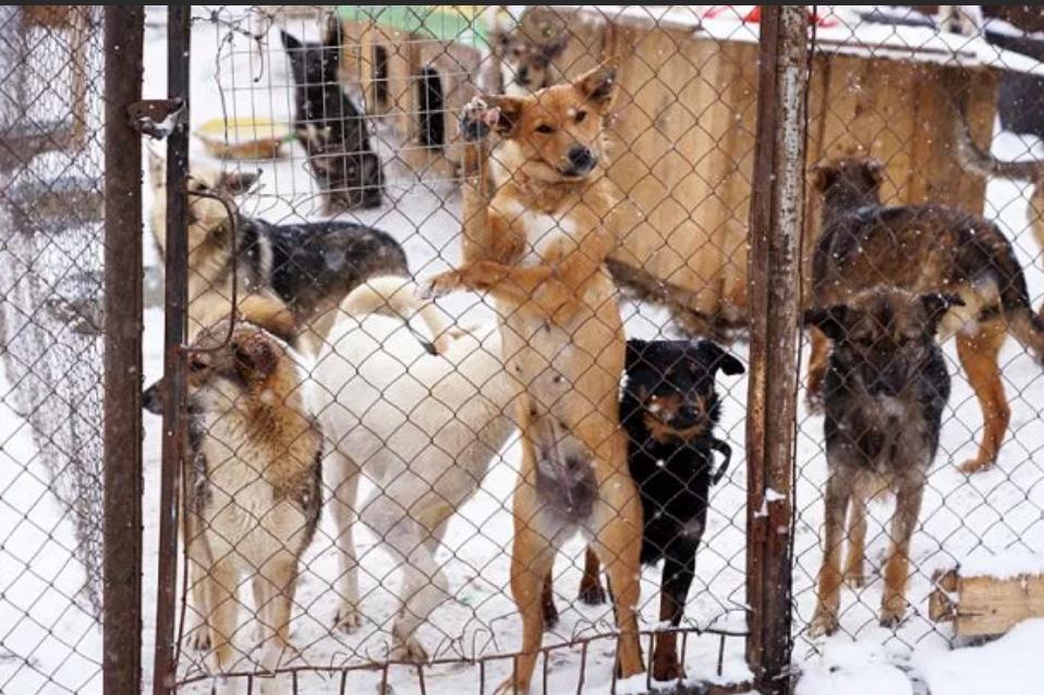 леспаркхоз тюмень официальный сайт фото животных гномики
