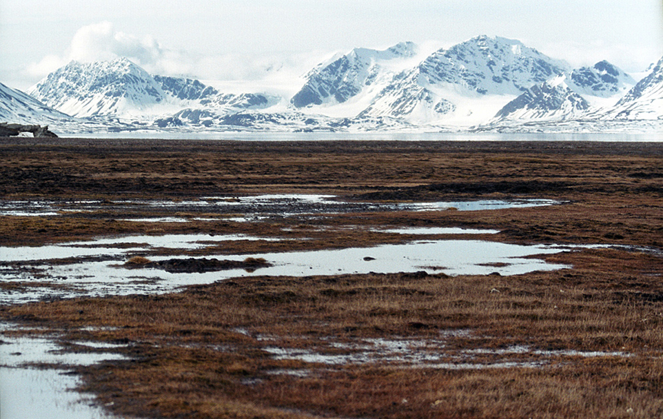 картинка арктические почвы наша задача будет